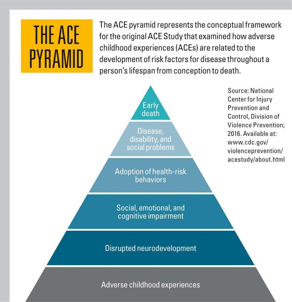 Ace Study Model
