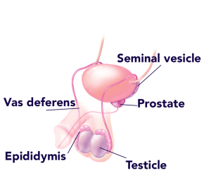 Click to See More in Urology Illustrated